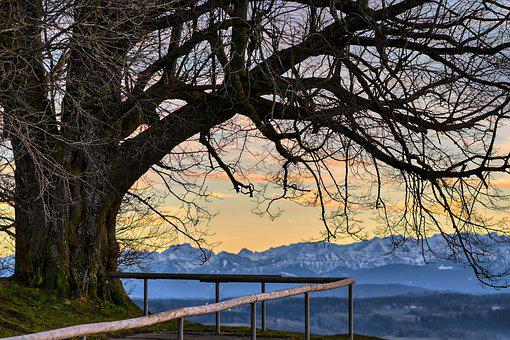 Tree, Winter, Kahl, Aesthetic, Branches, Mountains
