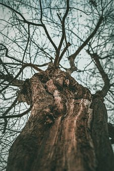 Tree, Bark, Nature, Forest, Tribe, Wood, High, Log