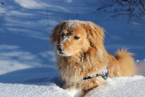 Dog, Favorite, Pet, Pretty, Puppies, View, Eyes