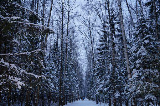Winter, Forest, Silence, Snow, Forests, Nature, Trees