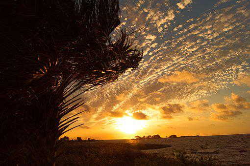 Florida, Sunset, Gulfcoast, Yankeetown, Palm, Island