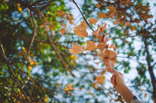 Leaf, Autumn, Winter, Hands, Sky, Season, Fresh, Tree