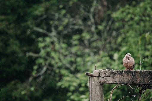 Bird, Green, Birds, Nature, Environment, Beak, Aerial