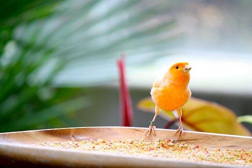 Bird, Yellow, Orange, Feeding, Animal, Feather