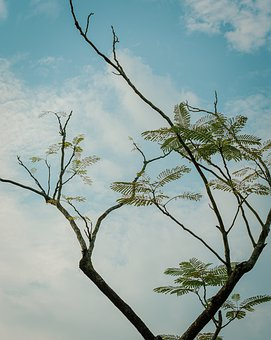 Blue Sky, Sky, Nature, Cloud, Branches, Leaves
