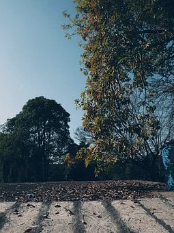 Autumn, Fall, Leaves, Nature, Forest, Colorful, Tree