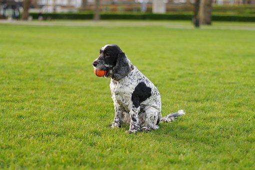 Dog, Animal, Pet, Nature, Field