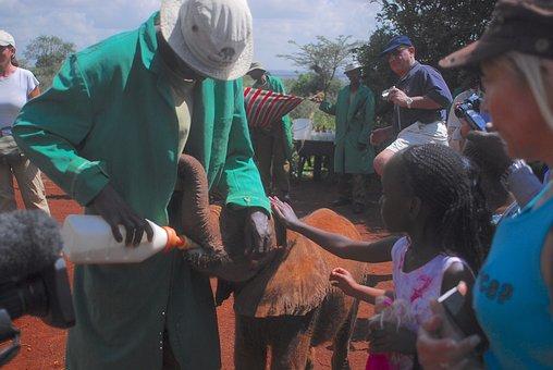 Feeding Baby Elephants, Bottle Feeding