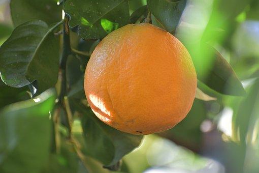 Orange, Oranges, Fruit, Citrus Fruits, Sano, Food