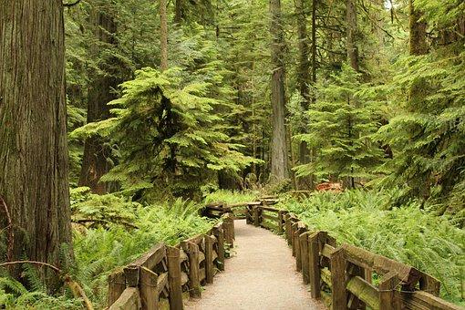 Tree, Forest, Nature, Hiking, Green, Big, Promenade