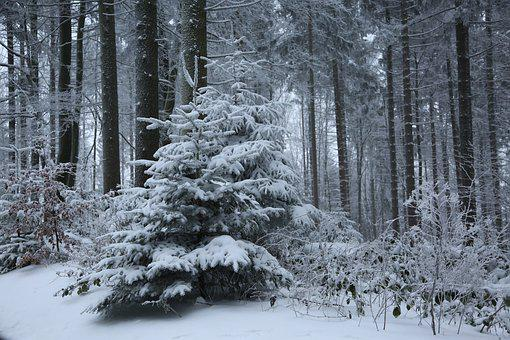 Winter, Cold, Wintry, Snow, Frost