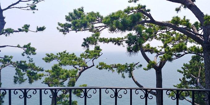 Geoje, Having An Affair, Botania, Sea, Pine, Landscape