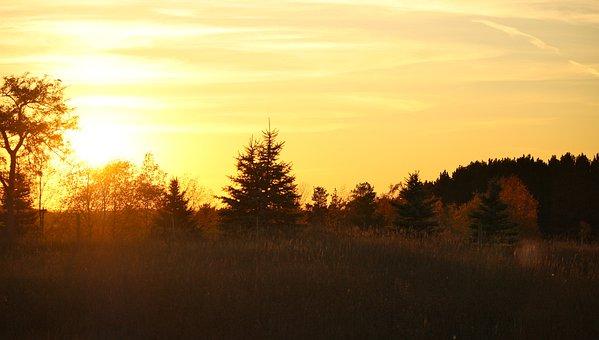 Sunset, Sun Woods, Trees, Nature, Forest, Landscape