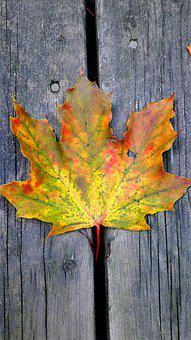 Leaves, Fall, Autumn, Colorful, Nature, Leaf, Tree
