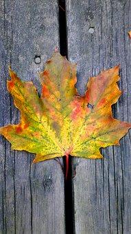 Leaves, Fall, Autumn, Colorful, Nature, Leaf, Tree