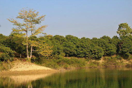 River, Trees, Nature, Water, Lake, Landscape, Forest