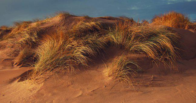 Sand Dune, Marram Grass, Beach, Nature, Dunes, Sand