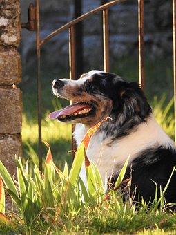 Peace, Dog, Calm, Zen, Nature, Animals, Portrait, Puppy