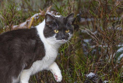 Cat, Pet, Mammal, Animals