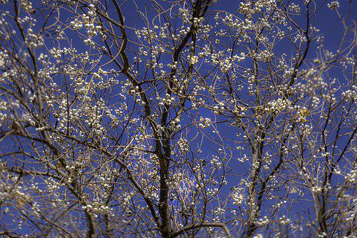Tree, Greeting Card, Postcard, Greeting, Sky, Heyday