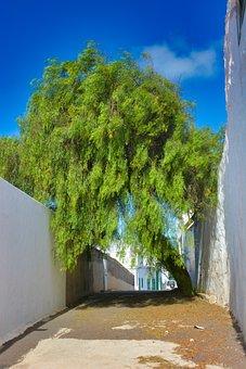 Tree, Road, Street, Fusion, Path
