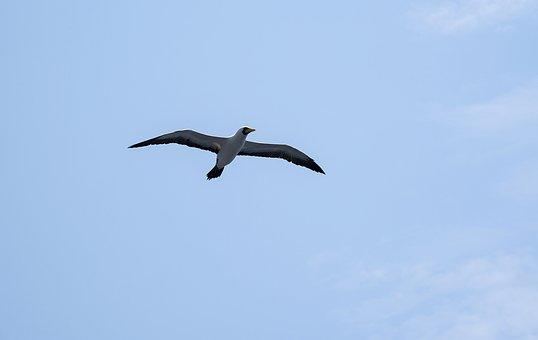 Seagull, Bird, Sea, Flight, Nature, Animal, Flying