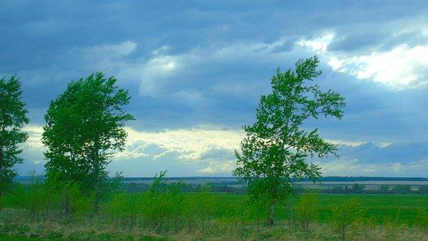 Russia, Siberia, Nature, Field, Sky, Horizon, Tree