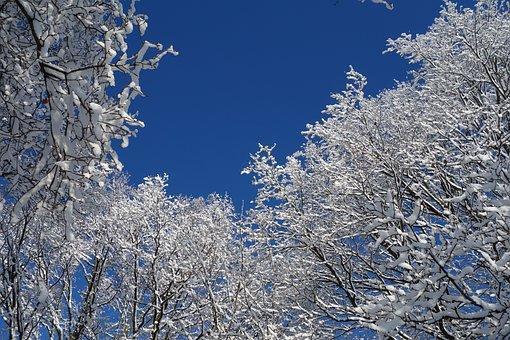 Snow, Winter, Trees, Sky, White, Blue, Landscape, Cold
