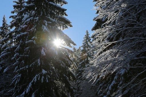 Winter, Sun, Wintry, Landscape, Snow