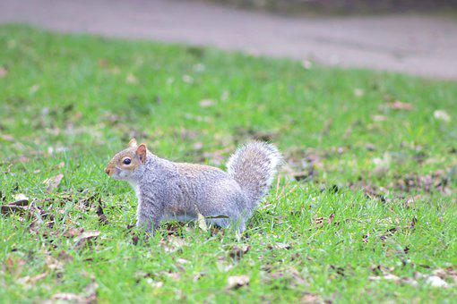 Squirrel, Animal, Rodent, Cute, Furry, Wild, Wildlife