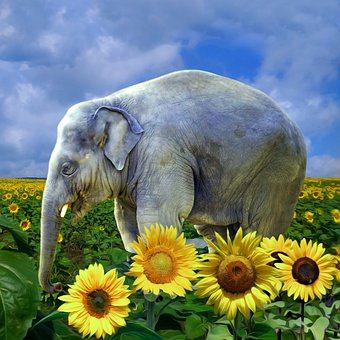 Elephant, Sunflowers, Field, Summer, Circus, Baby