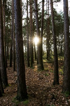 Woods, Sunlight, Forest, Trees, Nature