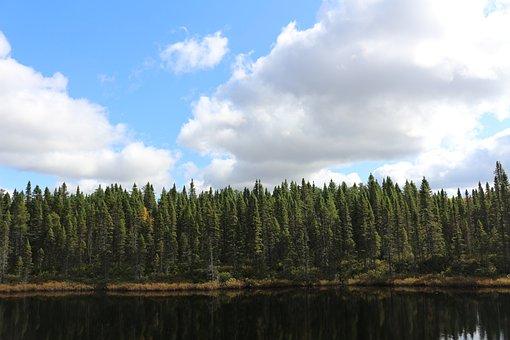 Nature, Forest, Spinet, Landscape, Tree