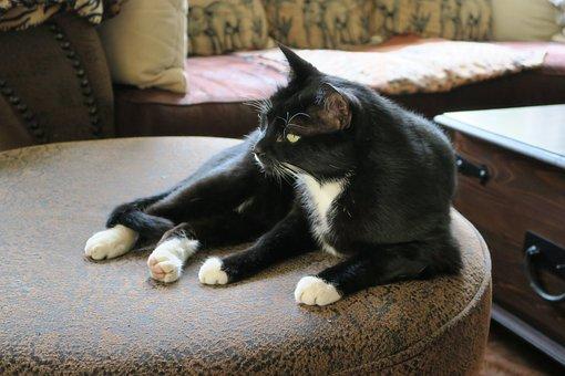 Cat, Black, Black And White, Boss, View