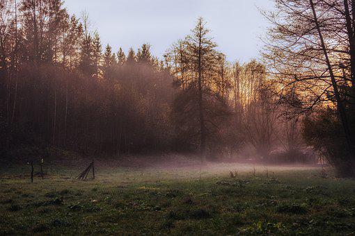 Tree, Nature, Landscape, Grass, The Fog, Light, Weather