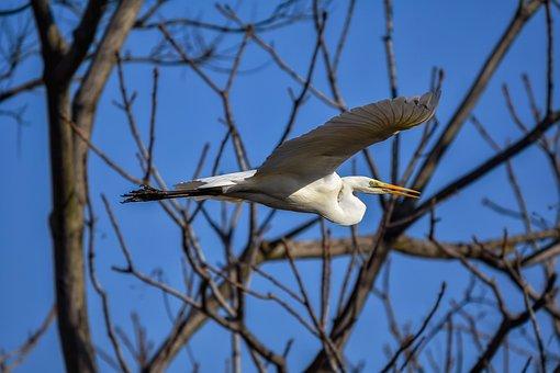 Animal, Sky, Wood, Bird, Wild Birds