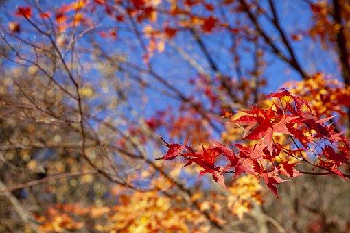 Autumn Leaves, Landscape, Nature, Wood, The Leaves