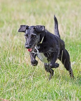 Action, Animal, Breed, Canine, Cute, Dog, Exercise