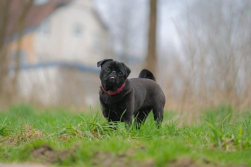 Dog, Out, Meadow, Animal, Pet, Hundeportrait, Nature