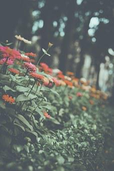 Flowers, Nature, Water, Outdoors, Color, Daytime