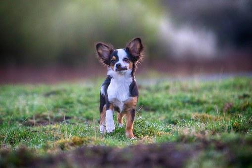 Dog, Out, Attention, Pet, Hundeportrait, Nature