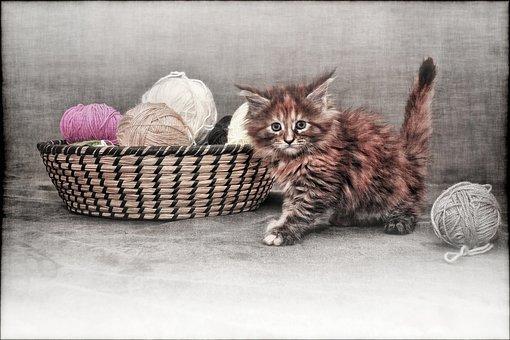 Cat, Young Cat, Kitten, Grunge, Vintage