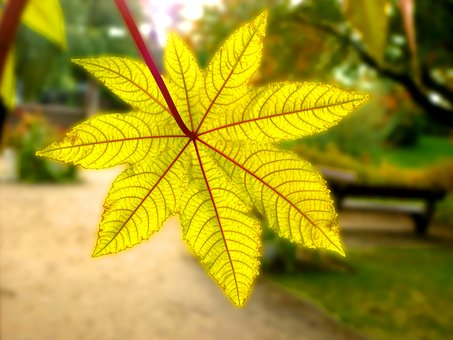 Leaf, Gourd, Wonder Tree, Park, City Park, Bush, Autumn