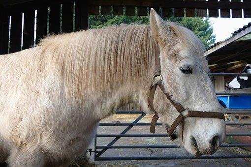Animal, Horse, Mammal, Nature, Farm, Stallion, Mare