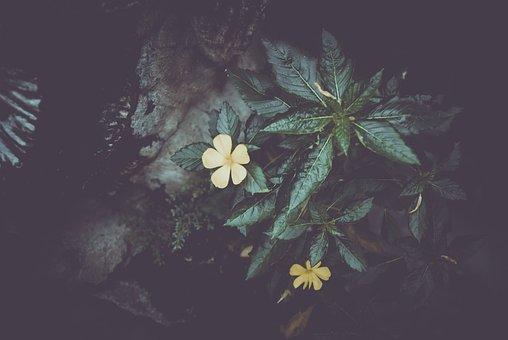 Flower, Leaves, Tree, Fine Art, Painting, Card
