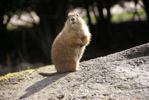 Mammal, Wildlife, Rodent, Cute, Squirrel, Animal, Zoo