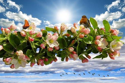 Spring, Apple Blossom, Blossom, Bloom, Apple Tree, Sun