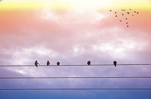 Birds, Flight, Freedom, Sky, Sunrise, Sunset, Wing