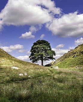 Sycamore Gap, Robin Hood, Northumberland, Landscape