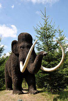 Sculpture, Animal Sculpture, Wool Mammoth, Urzeittier
